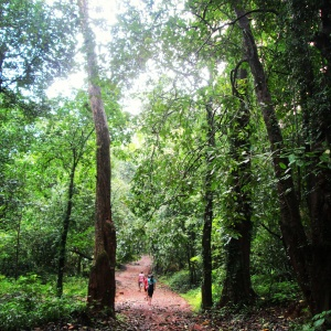 Walking through Mollem National Park